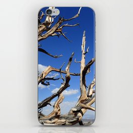 Trees of ancient times iPhone Skin