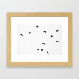 Ravens Birds in Black and White Framed Art Print