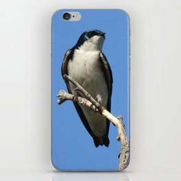 Male Tree Swallow iPhone Skin