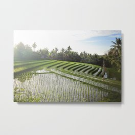 rice paddy at dawn Metal Print
