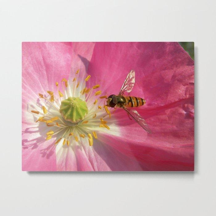 flower fly macro VII Metal Print