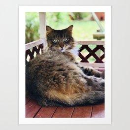 Green Eyes & Fluff (Lanai Cat Sanctuary) Art Print