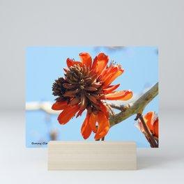 Coral Tree Bloom Mini Art Print