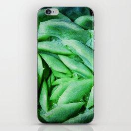 succulent cactus III iPhone Skin