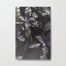 Dewy Purple Sage Metal Print