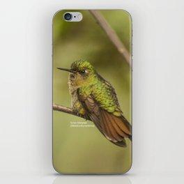 Tyrian Metaltail, Hummingbird in Ecuador iPhone Skin