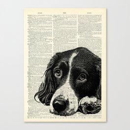 Vintage Springer Spaniel Canvas Print