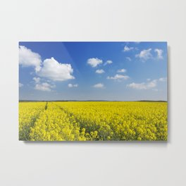 Path through blooming canola under a blue sky with clouds Metal Print