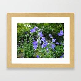 Blue bell flower /Japanese garden Framed Art Print