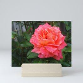 Rosey Pink Mini Art Print