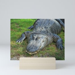 Gator in Davie Mini Art Print