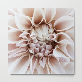 Cafe Au Lait Dahlia Close Perspective Metal Print