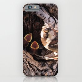 House Sparrow Keeping House iPhone Case