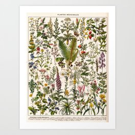 Adolphe Millot - Plantes Medicinales B - French vintage poster Art Print
