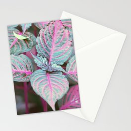 Longwood Gardens Autumn Series 314 Stationery Cards