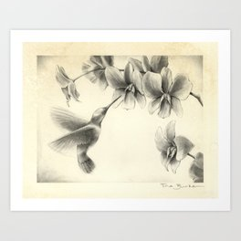 Hummingbird with orchid Art Print