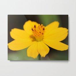 Cosmos Sulphureus named Ladybird Dwarf Lemon Metal Print
