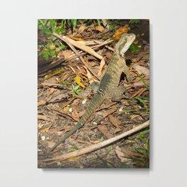 Eastern Water Dragon Metal Print