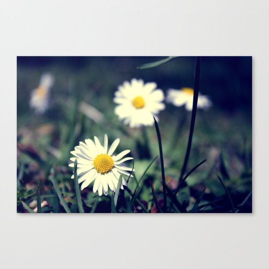 MAYWEED Canvas Print