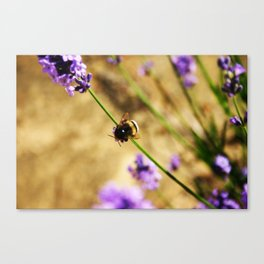 'Bumble Bee' by TDL Canvas Print