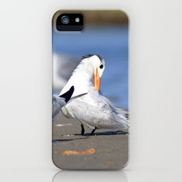 Watercolor Bird, Royal Tern 10, Janes Island, Maryland iPhone Case