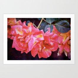 Rose 293 Art Print