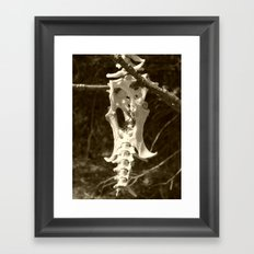 armadillo bones Framed Art Print