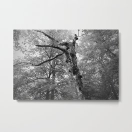 Menacing Forest Metal Print