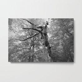 Menacing Forest Metal Print