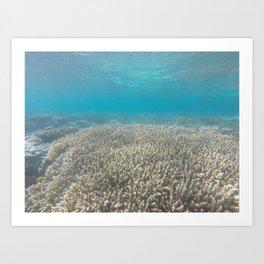 fishy fishy fishy, can't you sea Art Print