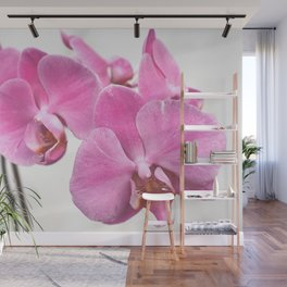 Orchid flowers Wall Mural