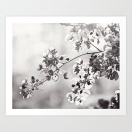 Black and White Floral Photography, Grey Neutral Nature Art, Light Gray Botanical Flower Photo Art Print