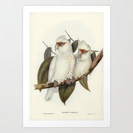 Long-billed Cockatoo (Licmetis nasicus) illustrated by Elizabeth Gould (1804-1841) for John Goulds (1804-1881) Birds of Australia (1972 Edition 8 volumes) Art Print