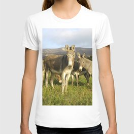 donkey band, donkey, photo, nature, perverse, band, field, lanscape T-shirt