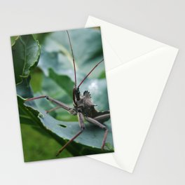 The Assassin--Animal Photography Prints Stationery Cards