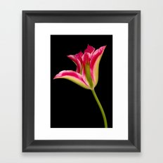 Tulipa Framed Art Print