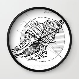 Geometry of a Charonia tritonis Wall Clock