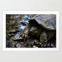 Resting in the Water Art Print
