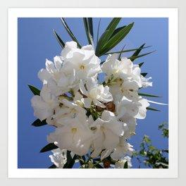 Nerium Oleander White Art Print