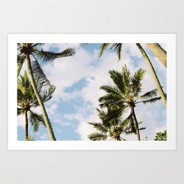 Palm tree in Cairns Art Print