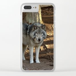 Forest Timber Wolf Clear iPhone Case