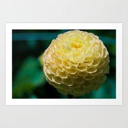 Yellow Dahlia Macro image Art Print