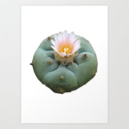 "Lophophora ""Peyote"" Williamsii Art Print"