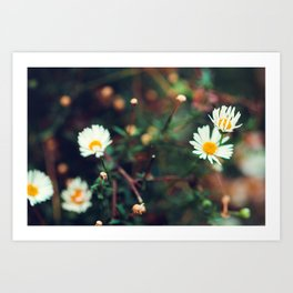Camomile meadow nature background. Soft focus. Art Print