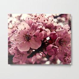 Spring Pink Plum Blossoms Metal Print