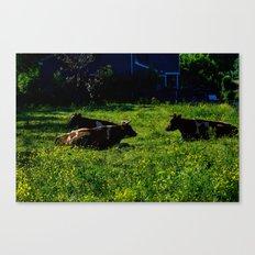 Chillin' Cows  Canvas Print