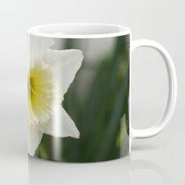 White and yellow daffodils, early spring flowers Coffee Mug