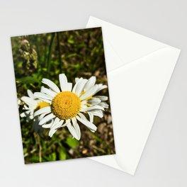Daisy, Daisy Stationery Cards