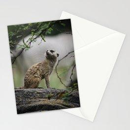 Meerkat 1 Stationery Cards