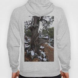 Knobbier Tree Hoody